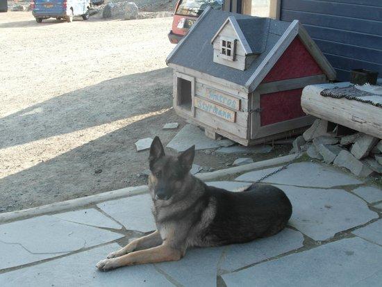 Basecamp Hotel : Resident dog