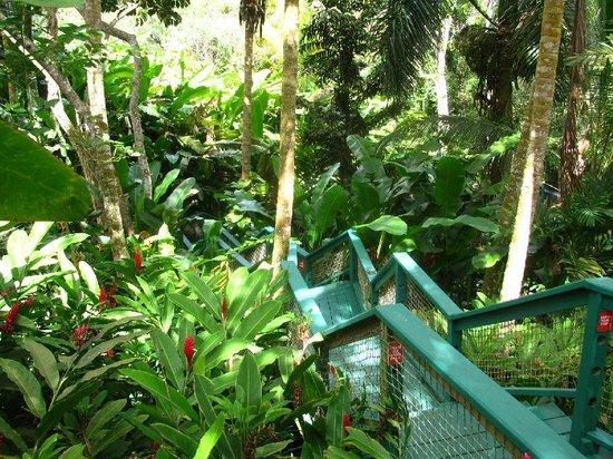 St. Peter Greathouse Estate & Gardens: Petit sentier.