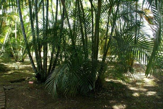 Lankester botanical gardens picture of jardin botanico for Jardin lankester