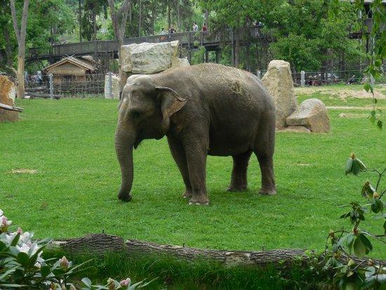Prague Zoo : Слон