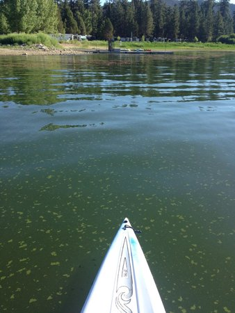 Paddles and Pedals: Paddle boarding