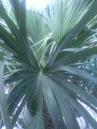 Hilton Fort Lauderdale Marina : Palms blocked pool view.