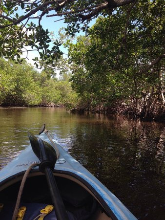 Tarpon Bay Explorers: Rented out a kayak and my boyfriend and I went around the bay. We saw birds, crabs, jumping fish