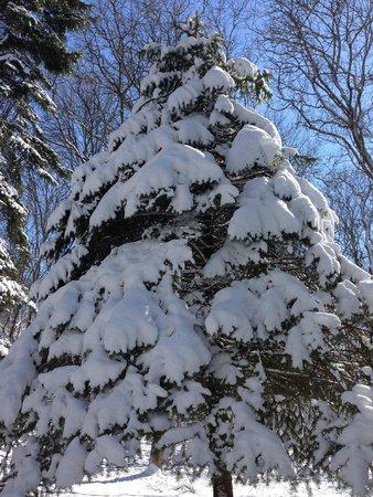 Rus Sanatorium: Снег выпал