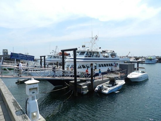 Dolphin Fleet Whale Watch : Our ship, the Dolphin X