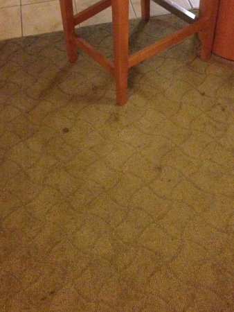 Platinum Hotel and Spa : One of many stains in the unit
