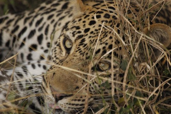 Monwana Game Lodge: 1st safari day in Monwana