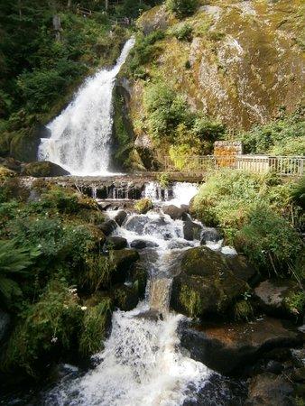 Adler: Triberg Waterfalls