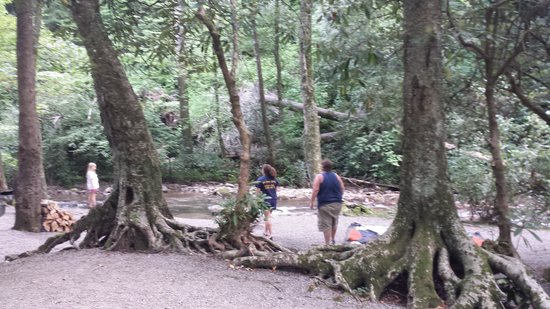 Indian Creek Campground : this is site 10. it is huge and well laid out.