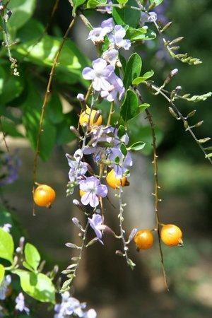 National Gardens: Park Athen 8 Blüten und Früchte