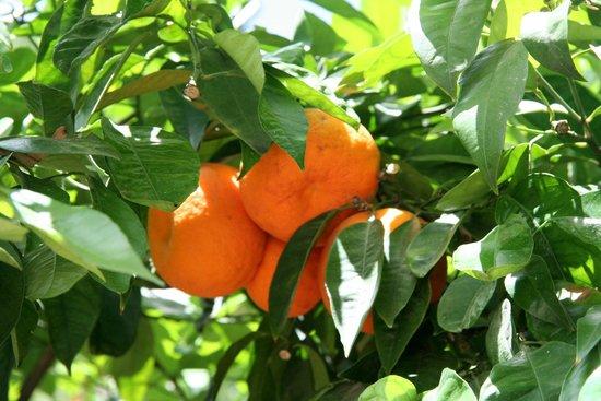 National Gardens : Park Athen 3 Früchte