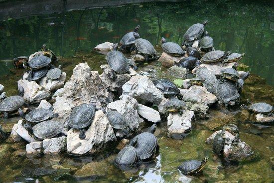 National Garden : Park Athen 5 Schildkröten