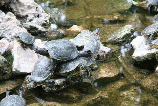 National Garden : Park Athen 6 Schildkröten