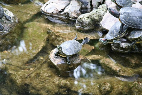 National Garden : Park Athen Schildkröten