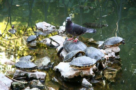 National Garden : Park Athen 10 Taube auf Schildkröte