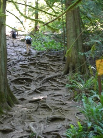Goldstream Provincial Park: The easy part of the hike up Mt Finlayson