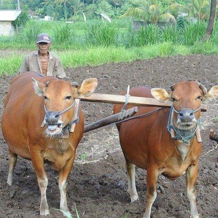 Bali Tours with Parto