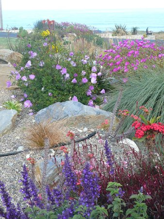 Cambria Shores Inn: Flowers on the hotel grounds