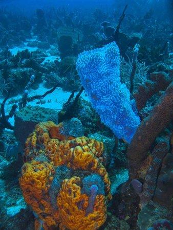 Picard Beach Cottages : plongée à proximité (cabrit diving center)