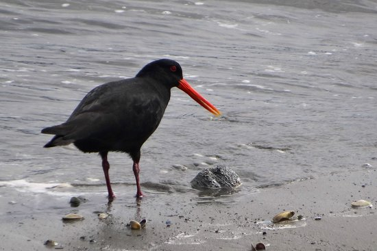 Coastal Heights Apartment: Oyster Catcher