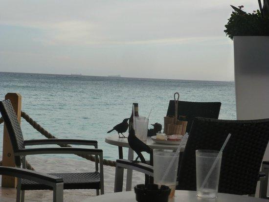 Tamarijn Aruba All Inclusive: Mientras tomaba un snack