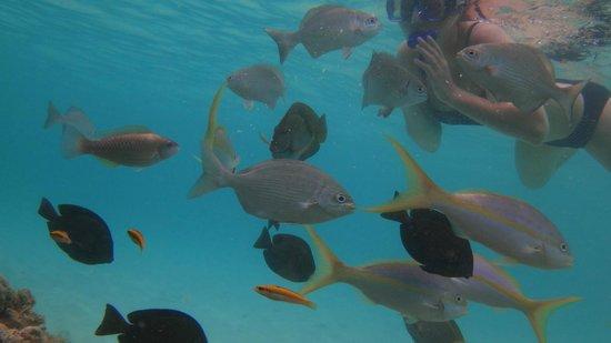 Paradisus Rio de Oro Resort & Spa: milliers de poisson