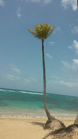 Sirenis Punta Cana Resort Casino & Aquagames: All these pics were taken from my cell phone.  