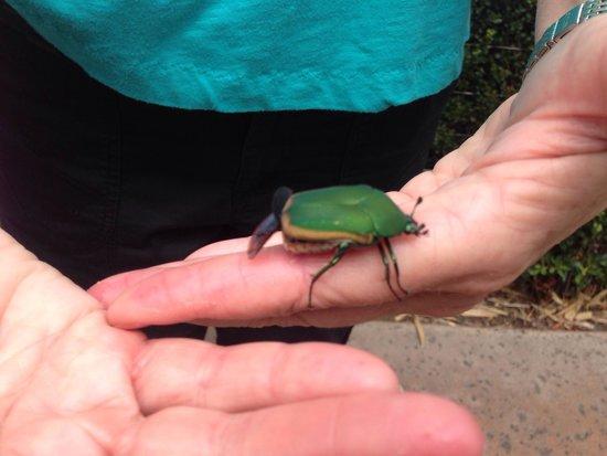 San Diego Zoo: June bug