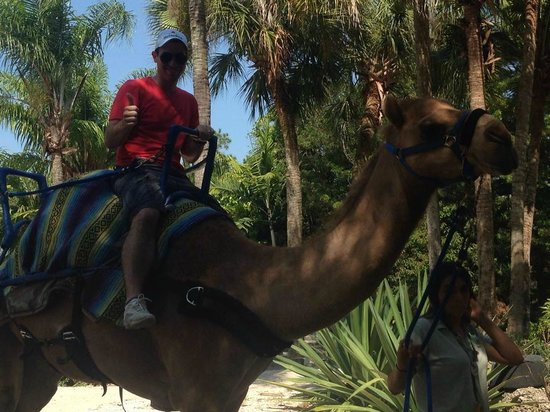 Zoo Miami: Andando de dromedário