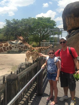 Zoo Miami: Alimentando a girafa