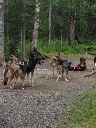 Iditarod Headquarters: Iditarod dog sled