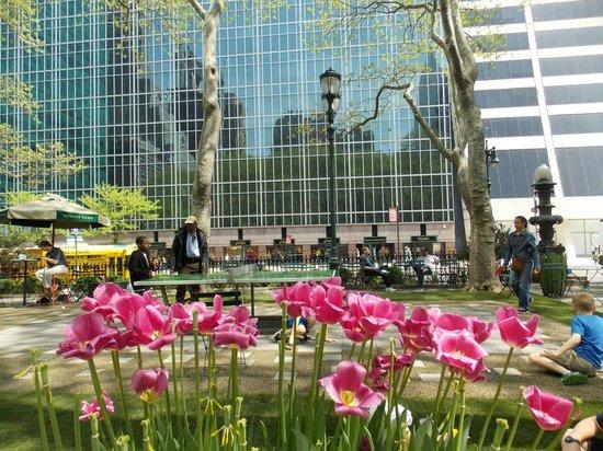 Bryant Park : Delicados canteros con tulipanes