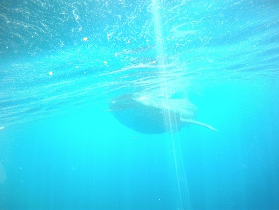 Island Adventures Mexico: whale sharks