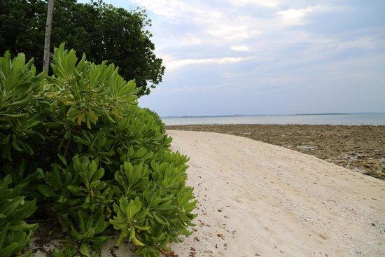 Nikoi Island: Beach outside the bungalow