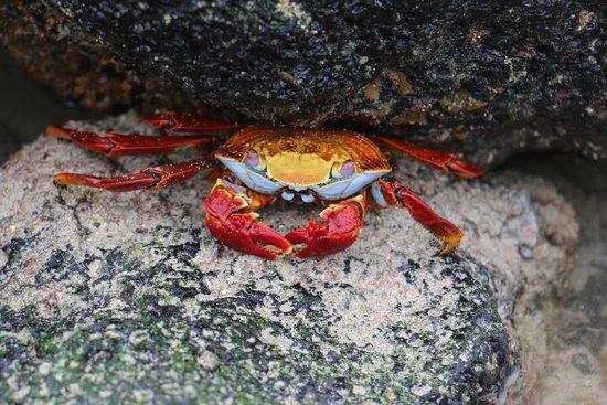 Finch Bay Galapagos Hotel: Crab