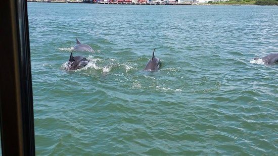 BayWatch Dolphin Tours: some of the dozens of dolphins we saw!