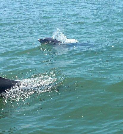 BayWatch Dolphin Tours: happy dolphin!