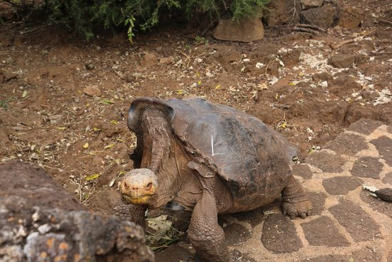 Finch Bay Galapagos Hotel: Turtle