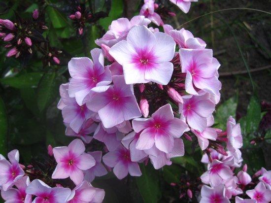 Encore Une Belle Fleur Foto Van Route Des Gerbes D Angelica