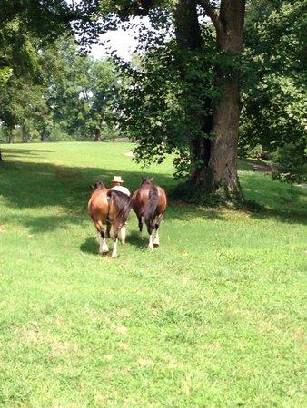 Maymont : Horses