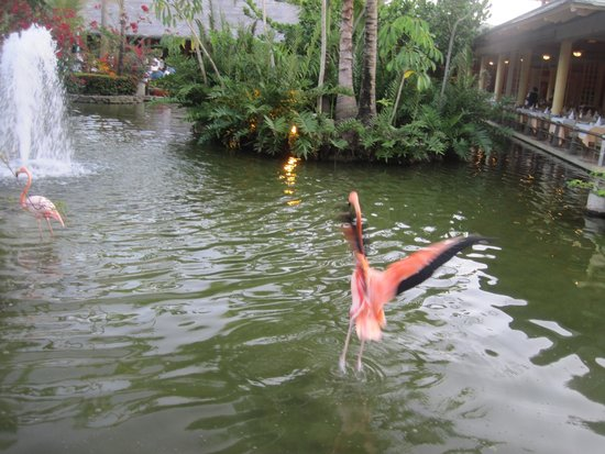 Iberostar Bavaro Suites: Flamingos were so fun to watch