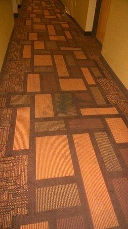 Comfort Inn: Filthy carpet