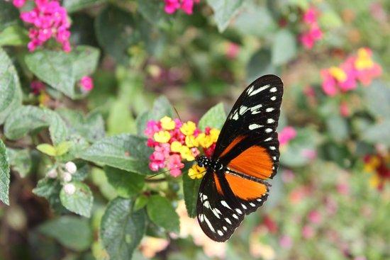 Casa Batsu : Beautiful and plentiful butterflies