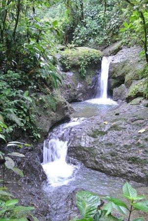 Rios Tropicales: sweet waterfall