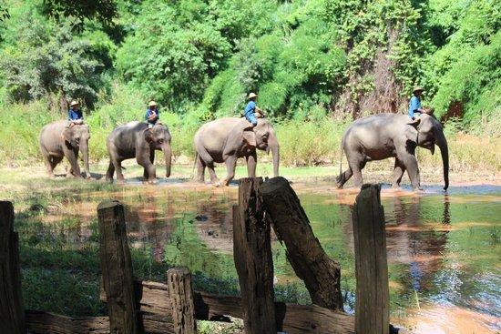 The Elephant Training Center Chiang Dao: Show