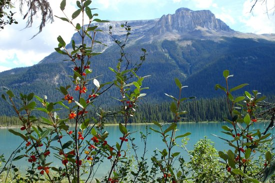 Emerald Lake Lodge: Emerald Lake Circuit