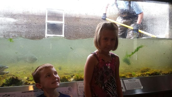 Shepherd of the Hills Fish Hatchery: Kids enjoying the start of it