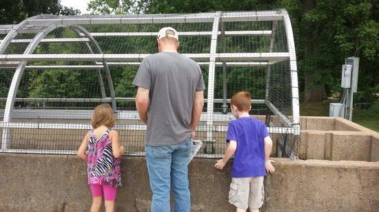 Shepherd of the Hills Fish Hatchery : The family feeding the fish