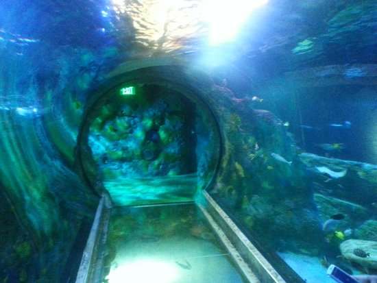 The Small Tunnel About 10 39 Long Picture Of Sea Life