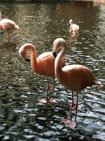 The Westin Maui Resort & Spa: Flamingos in the hotel lobby